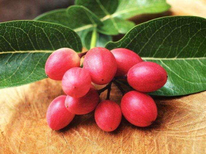 manfaat tanaman miracle fruit