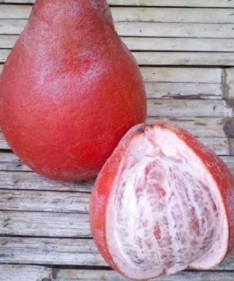 Ciri-Ciri Jeruk Pamelo Merah