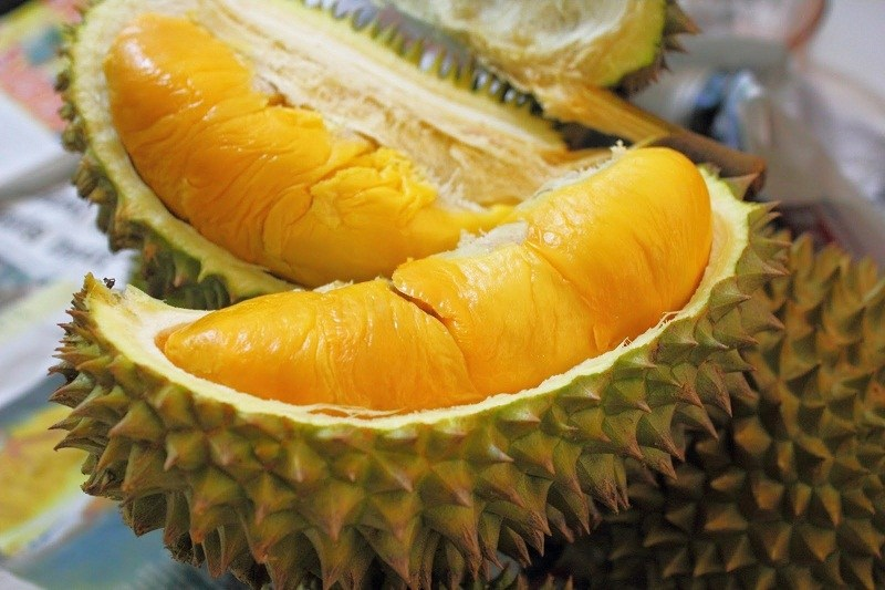 Manfaat Buah Durian Montong 3 Kaki