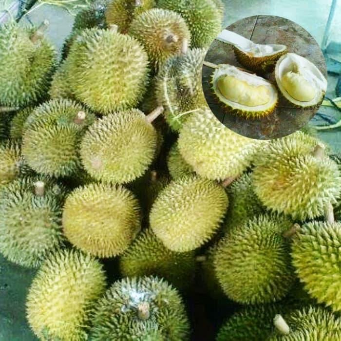 Manfaat Buah Durian Petruk