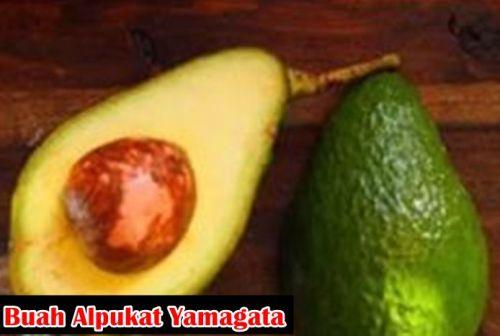 Manfaat Buah Alpukat Yamagata