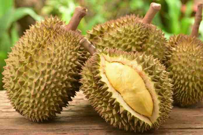 Keunggulan Bibit Durian Bawor Dongkelan