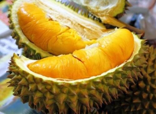 Ciri-ciri Pohon Durian Musang King