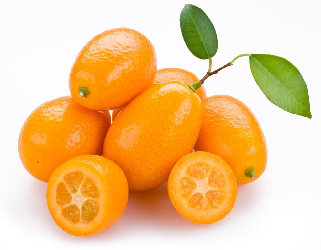 Jual bibit jeruk nagami 70cm