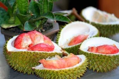 Harga Buah Durian Merah 3 kaki
