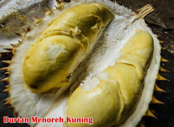 Ciri-ciri Tanaman Durian Menoreh Kuning