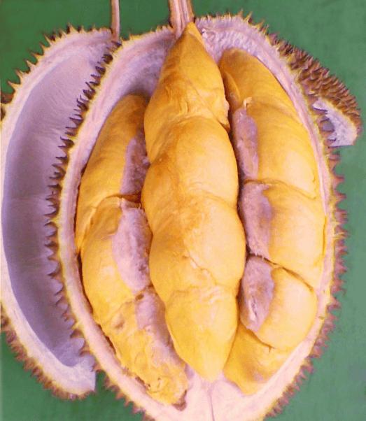 Manfaat Durian Menoreh Kuning